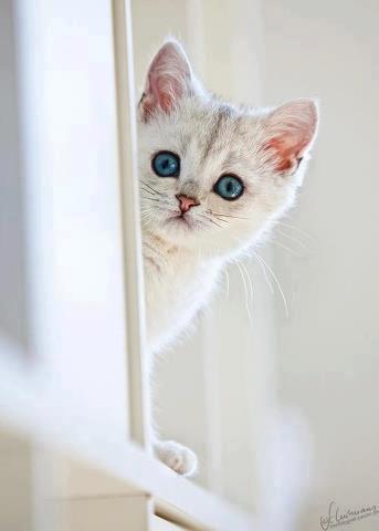 可愛い,猫,画像,まとめ135