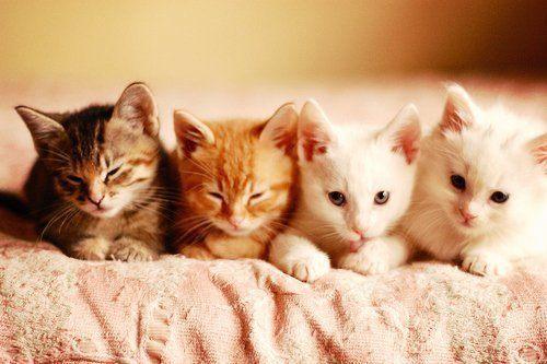 可愛過ぎる,猫,画像,まとめ138