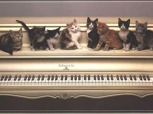 可愛過ぎる,猫,画像,まとめ139
