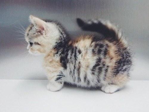 可愛過ぎる,猫,画像,まとめ167