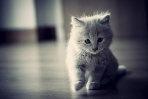 可愛い,猫,画像,まとめ185