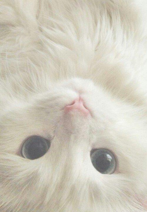 可愛過ぎる,猫,画像,まとめ187