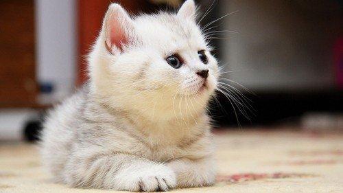 可愛い,猫,画像,まとめ191
