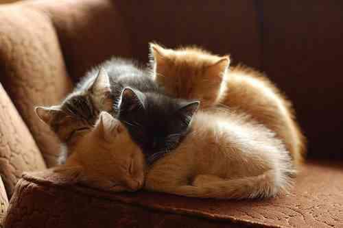可愛い,猫,画像,まとめ239