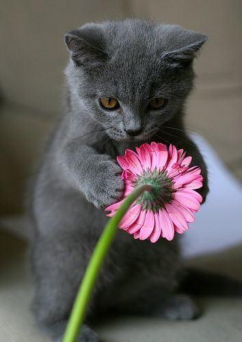 可愛い,猫,画像,まとめ252