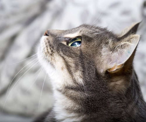 可愛い,猫,画像,まとめ273
