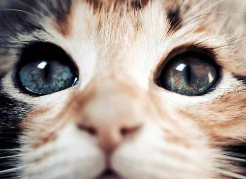 可愛い,猫,画像,まとめ278