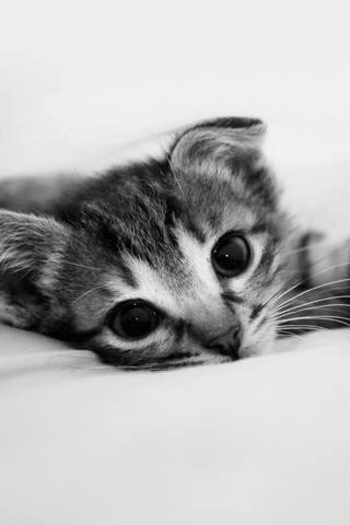 可愛い,猫,画像,まとめ284