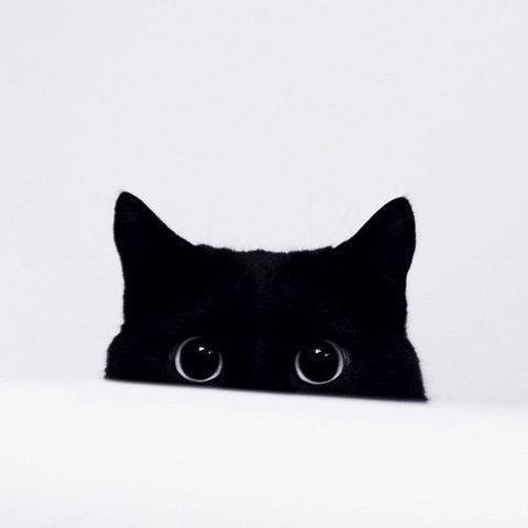 可愛い,猫,画像,まとめ315