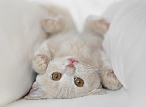 可愛い,猫,画像,まとめ346