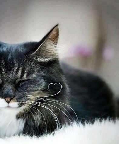 可愛い,猫,画像,まとめ352