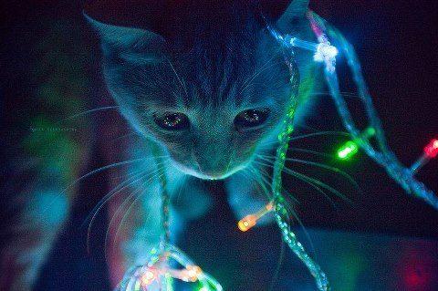 可愛過ぎる,猫,画像,まとめ399