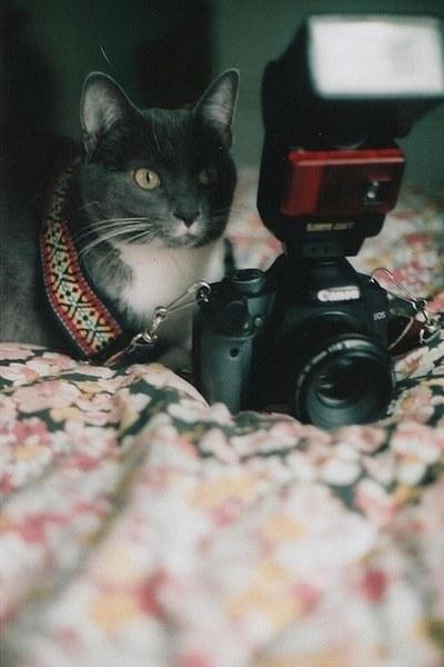 可愛過ぎる,猫,画像,まとめ420