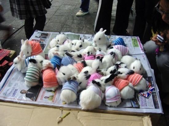 可愛すぎ注意,ウサギ,モフモフ,画像,まとめgi004