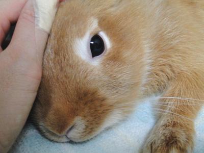 ウサギ,どアップ,顔,画像,まとめgi004