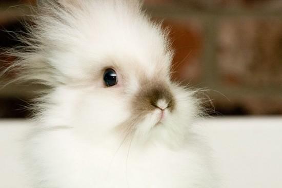 可愛すぎ注意,ウサギ,モフモフ,画像,まとめgi006