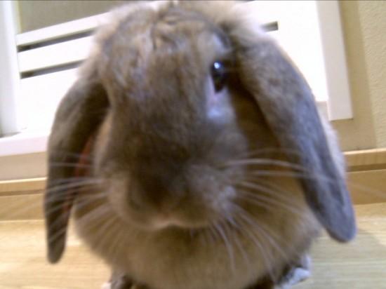 ウサギ,どアップ,顔,画像,まとめgi006