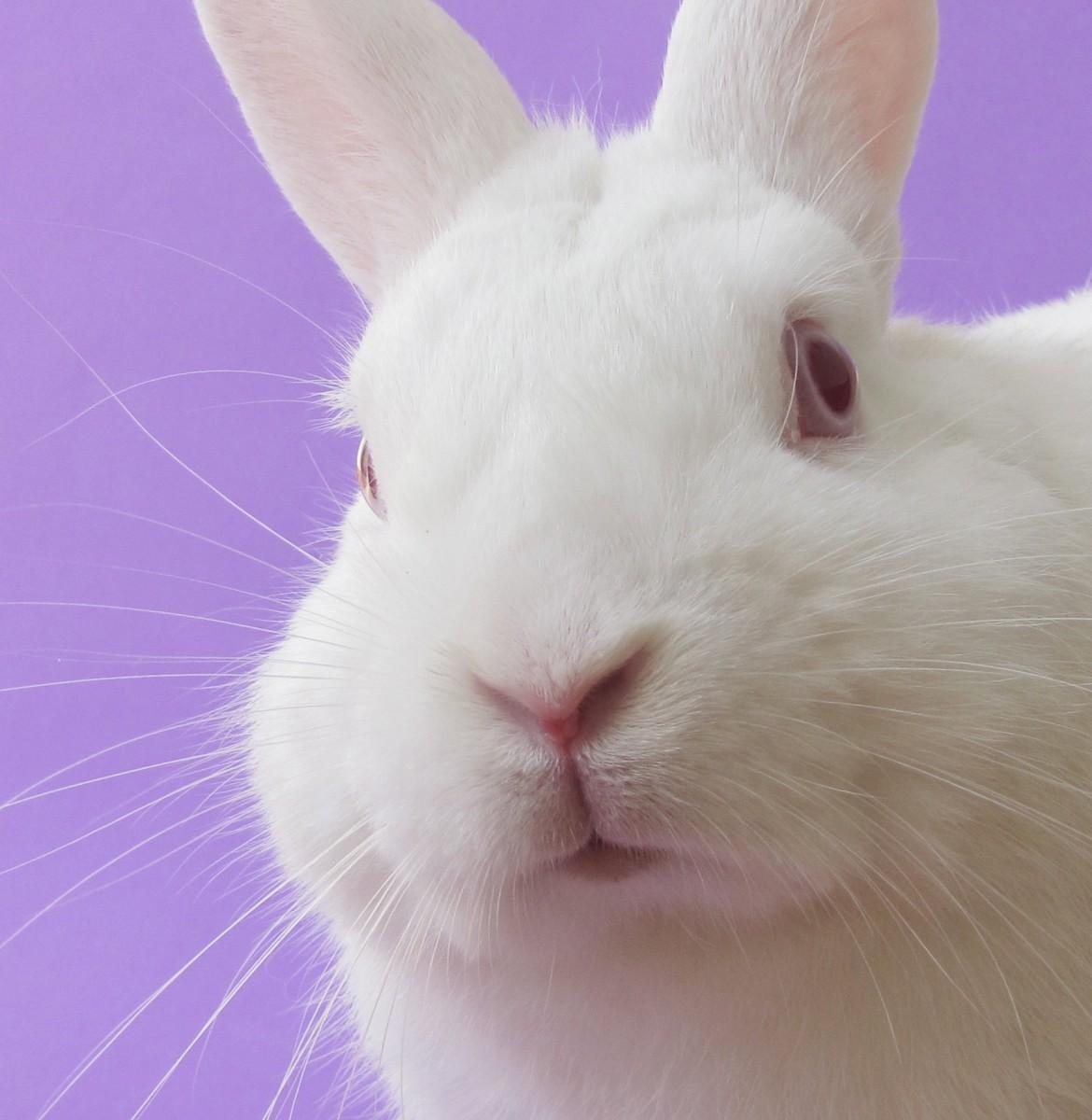 ウサギ,どアップ,顔,画像,まとめgi007