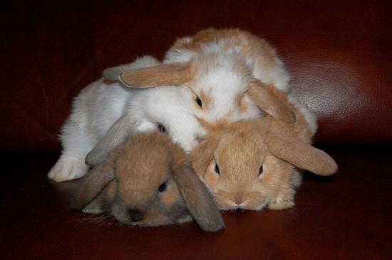 可愛すぎ注意,ウサギ,モフモフ,画像,まとめgi008