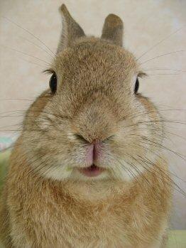 ウサギ,どアップ,顔,画像,まとめgi008