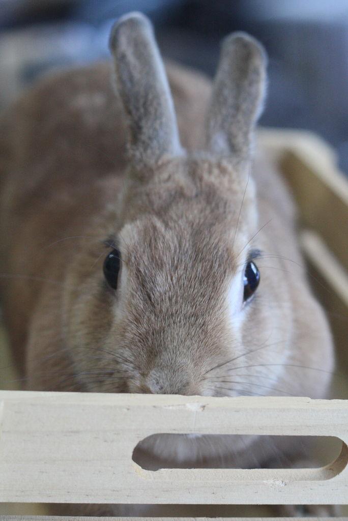 ウサギ,どアップ,顔,画像,まとめgi014