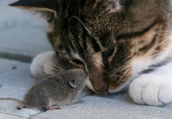 仲のいい,動物たち,画像,まとめgi016