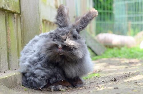 可愛すぎ注意,ウサギ,モフモフ,画像,まとめgi017