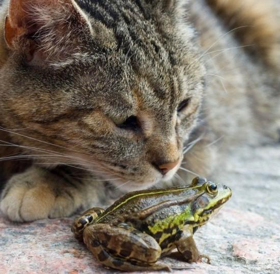 仲のいい,動物たち,画像,まとめgi017