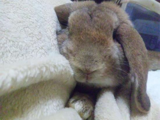 ウサギ,どアップ,顔,画像,まとめgi019