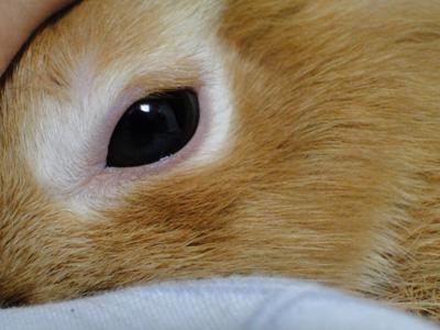 ウサギ,どアップ,顔,画像,まとめgi021