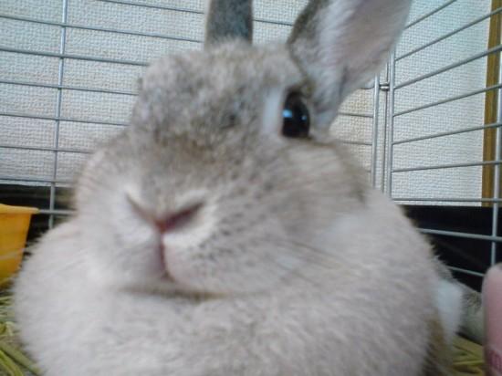 ウサギ,どアップ,顔,画像,まとめgi023