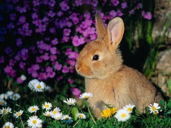 可愛すぎ注意,ウサギ,モフモフ,画像,まとめgi025