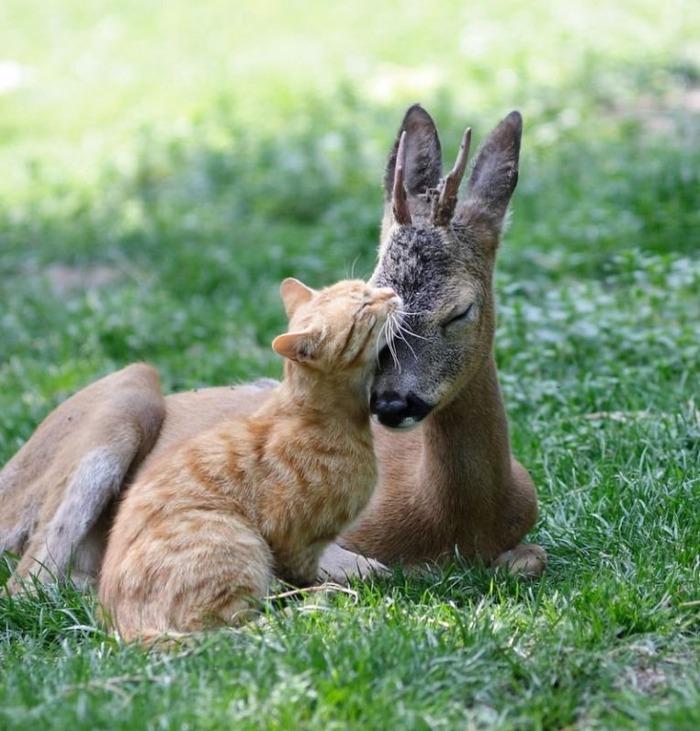 仲のいい,動物たち,画像,まとめgi027