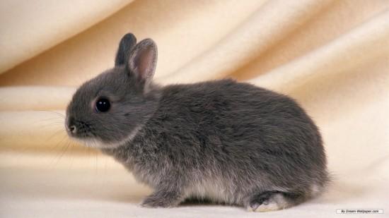 ネット,話題,人気,ウサギ,画像,まとめgi027