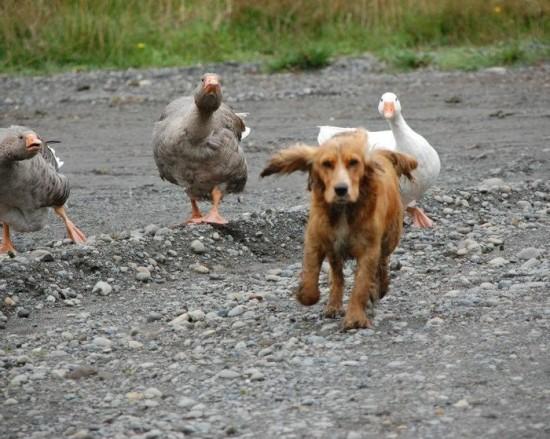 仲のいい,動物たち,画像,まとめgi031