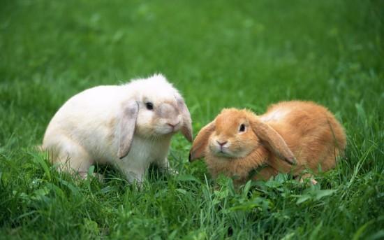 萌え死ぬ,可愛い,ウサギ,画像,まとめgi031