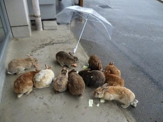 可愛すぎ注意,ウサギ,モフモフ,画像,まとめgi035