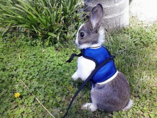 可愛すぎ注意,ウサギ,モフモフ,画像,まとめgi046