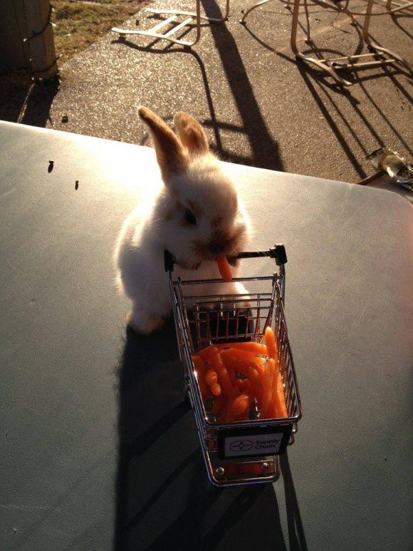 可愛すぎ注意,ウサギ,モフモフ,画像,まとめgi047