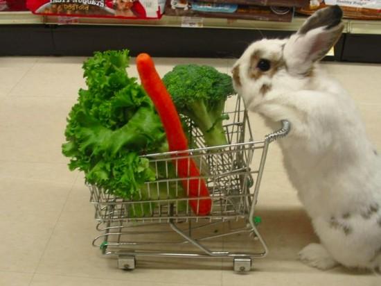 可愛すぎ注意,ウサギ,モフモフ,画像,まとめgi054