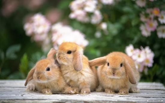 萌え死ぬ,可愛い,ウサギ,画像,まとめgi055