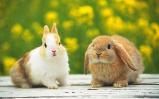 ネット,話題,人気,ウサギ,画像,まとめgi072