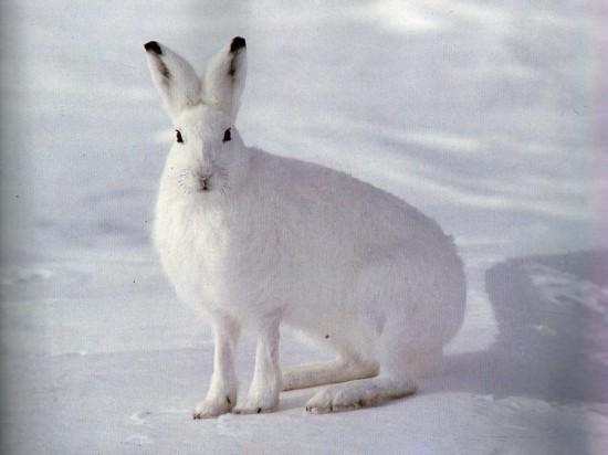 ネット,話題,人気,ウサギ,画像,まとめgi087