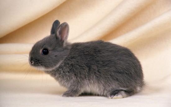 萌え死ぬ,可愛い,ウサギ,画像,まとめgi101