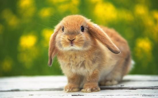 萌え死ぬ,可愛い,ウサギ,画像,まとめgi109