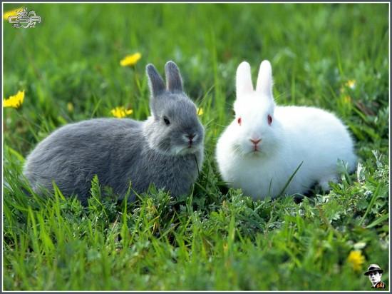 萌え死ぬ,可愛い,ウサギ,画像,まとめgi115