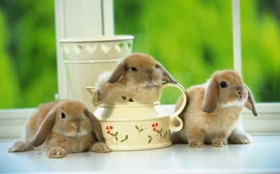 萌え死ぬ,可愛い,ウサギ,画像,まとめgi121