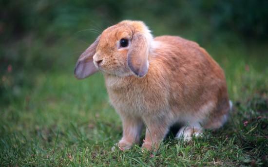萌え死ぬ,可愛い,ウサギ,画像,まとめgi123