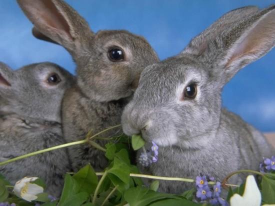 ネット,話題,人気,ウサギ,画像,まとめgi130