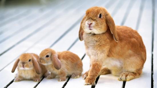 萌え死ぬ,可愛い,ウサギ,画像,まとめgi135